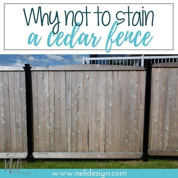 Pinterest image saying : why not to stain a cedar fence