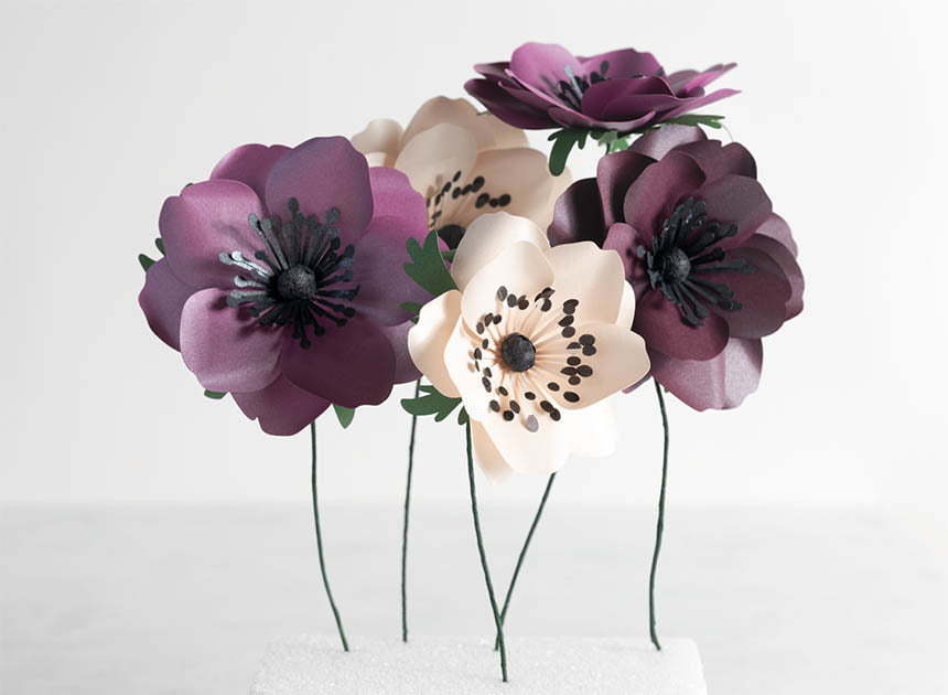 Anemone flowers from Kin and tonic